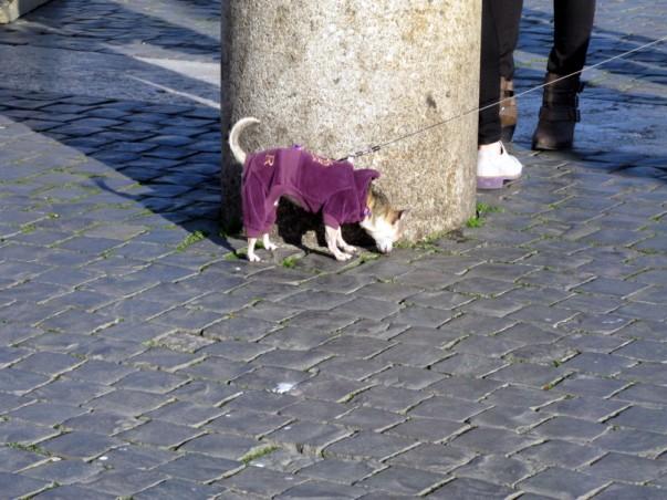 Dog St Peter's