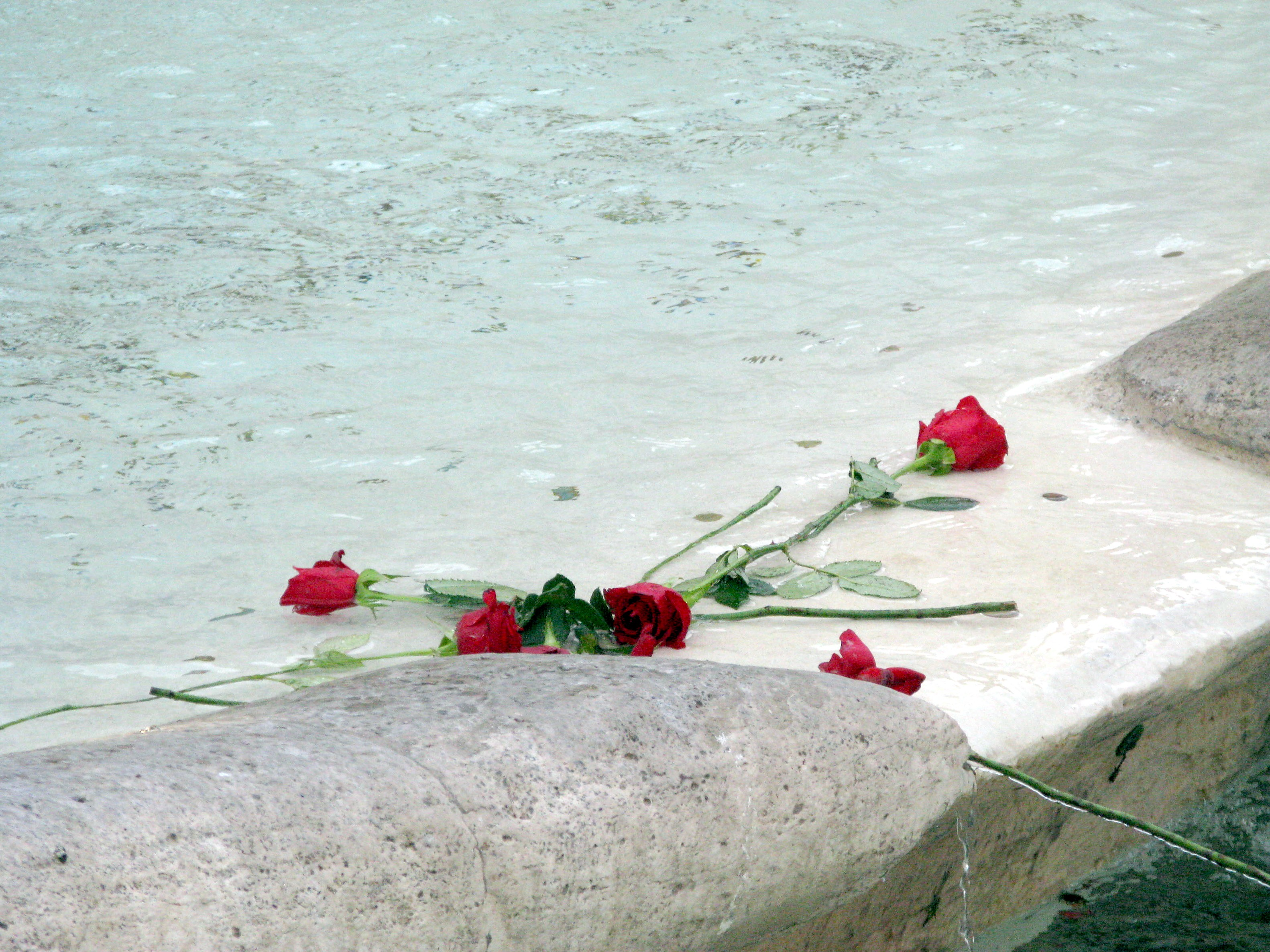 Roses thrown in fountain