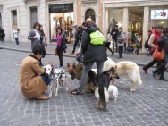 When in Rome, dog walking is popular