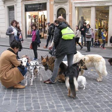 When in Rome, dog walking is popular